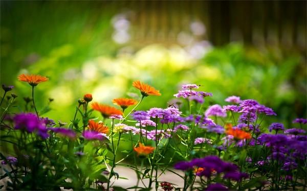 五�N草� 可以�椭��你的皮�w保持健康和美��