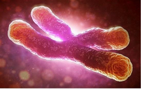 西北大学医学院华裔学者研究指出:染色体检查可提早13年预测癌症