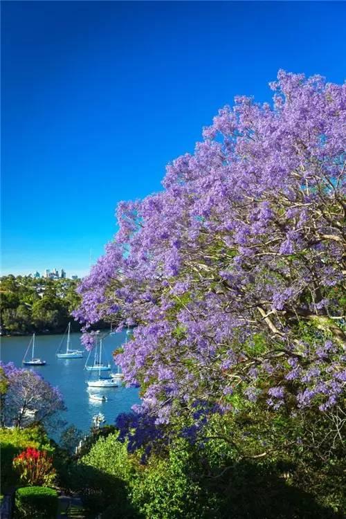 紫蓝色的澳洲梦幻仙境