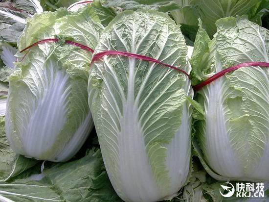 国际空间站菊花绽放!NASA要在太空种中国大白菜