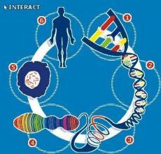"""你的基因是纯人类""""血统""""吗?人类基因组中再次""""擒获""""病毒DNA"""