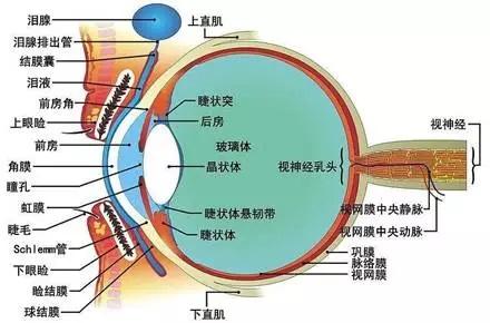 人类最精密的相机:人眼的光学