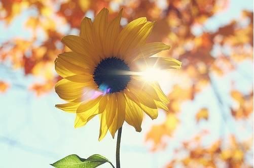 拥抱阳光,远离负能量的人!