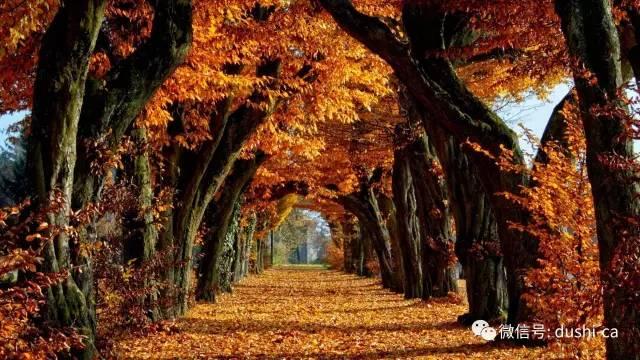 风景如画的枫叶王国