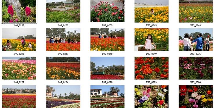 卡罗斯贝德花田Calosbed Flower Field开放:唯美花季 万紫千红如仙境