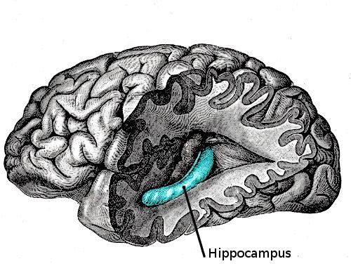 日本理化学研究所―麻省理工学院新研究推翻传统的记忆理论