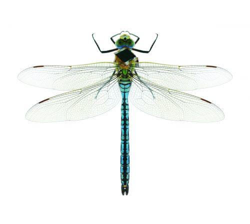 美国将在反恐战争中采用机器昆虫