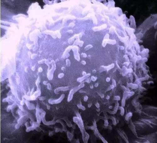《Cell》:宾夕法尼亚大学科学家破解癌细胞新阴谋