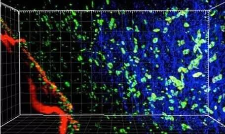 近期癌症免疫疗法研究领域的突破性进展