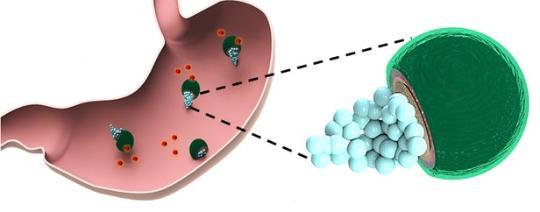 科学家用微型马达输送药物到小鼠胃部 & 远程入侵大脑 控制机体运动