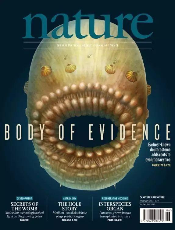 人类真正的远祖是皱囊虫