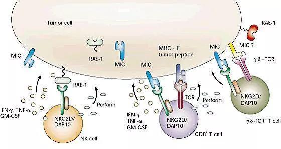 基于shRNA开发的非基因编辑通用型CAR-T技术可覆盖更多癌症种类