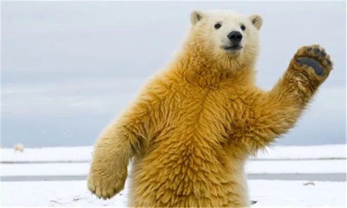 摩根士丹利:美股已经处于熊市中了!