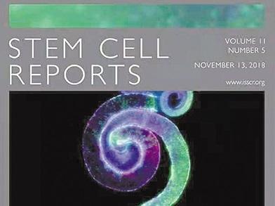 《细胞-代谢》:癌细胞形成肿瘤离不开线粒体