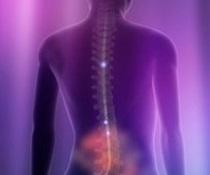 美国西北大学生物纳米科技研究所:再生组织技术有望用于脊髓修复