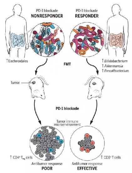 《Science》三篇重磅研究同期发表:肠道菌群竟对肿瘤免疫疗法如此重要