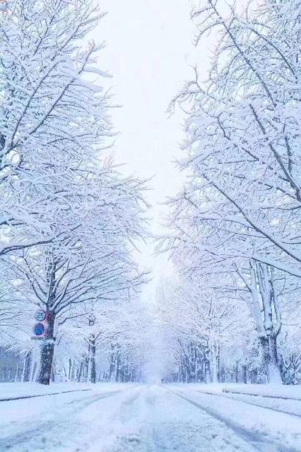 """""""丰年好大雪"""""""