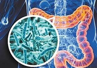 约翰斯・霍普金斯医疗中心:肠道缺少TLR4免疫蛋白会导致代谢紊乱