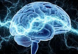 华盛顿大学(圣路易斯)科学家发现:抑制局部感知有助脑卒中恢复