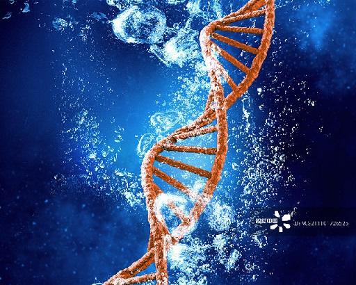 浙江大学医学院干细胞与再生医学中心绘制出全球首个哺乳动物细胞图谱