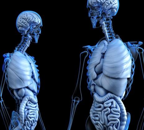 饮食也可以影响你的内心想法: 肠道细菌可影响大脑意识