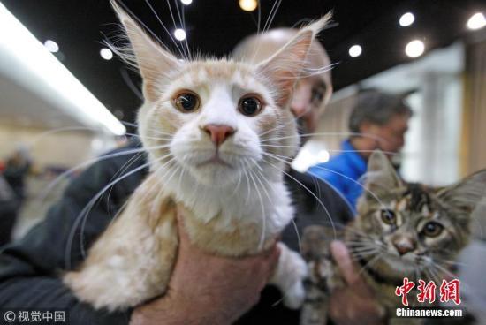 日本中央大学等研发猫用人造血液:没有血型差异 不会排异