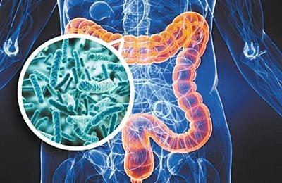 美国《癌细胞》:新研究发现脂肪细胞为肿瘤供能的机制