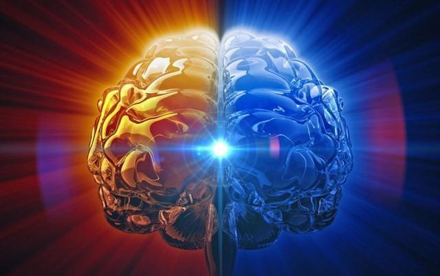 破解了结构之谜,就能再造大脑吗?
