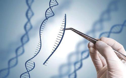 基因编辑技术正颠覆美国农业