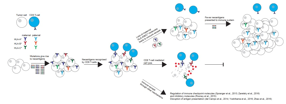 PD-1/PD-L1/CTLA-4肿瘤免疫治疗分子标志物大全