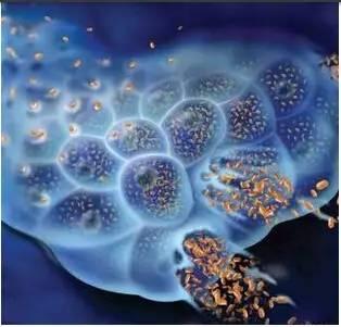 杜克大学李治中:导致癌症最重要的因素是什么?