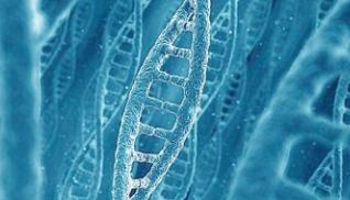 乔治亚大学 & 中科院遗传发育所:找到控制不同作物的共有休眠基因