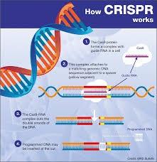 "UCSD开发出基因驱动系统:用""基因剪刀""CRISPR-Cas9提高Tyr"