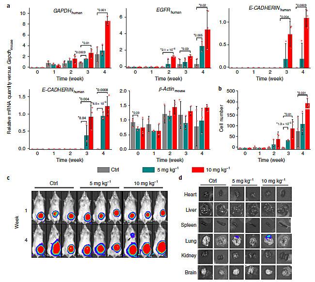 《Nature Nanotechnology》: 纳米颗粒(NP)促进癌症转移