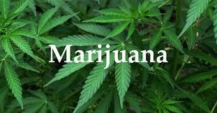 哈佛大�W公布最新研究:抽大麻�c精子�舛扔嘘P