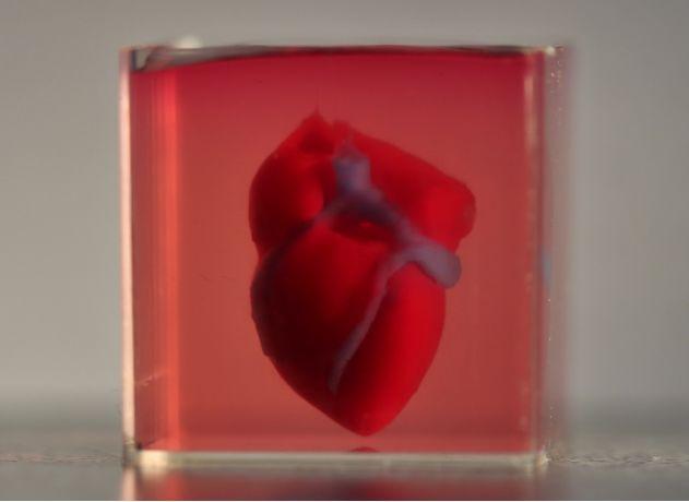 以色列特拉维夫大学成功3D打印出全球第一个完整的心脏