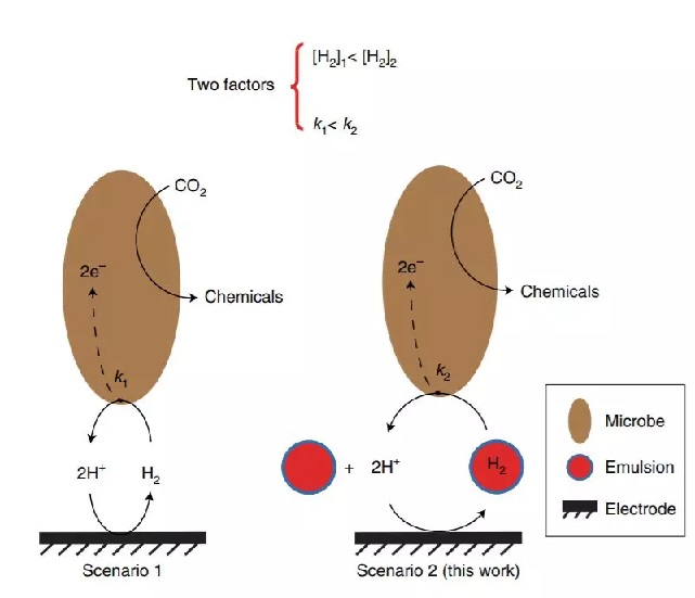 "Nature Catal: 给微生物喝点""奶""!CO2电还原性能激增!"