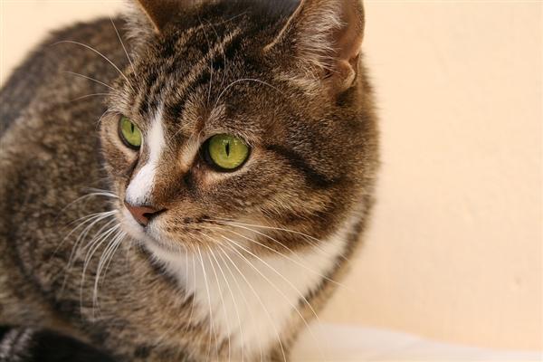 斯坦利医学研究机构发现: 养猫可能会导致精神分裂