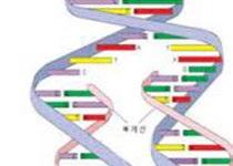 """康奈尔大学新研究用DNA分子组装类生命""""软机器人"""""""