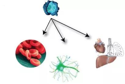 汇总:细胞治疗领域10年里程碑式研究进展(2010―2019年)