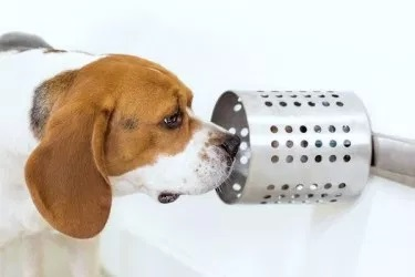 狗能�蚀_嗅出血液中的癌