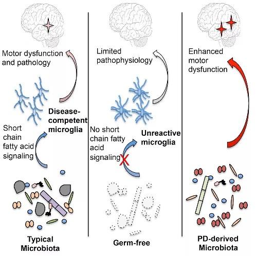 《Nature》:小分子靶向微生物组,最新的管线全在这里了!