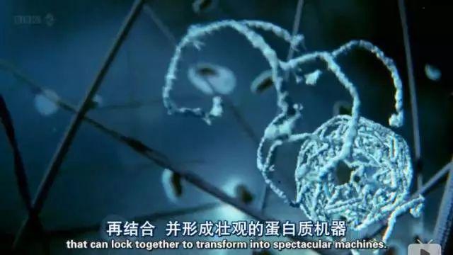 BBC:人体的奥妙(细胞暗战)