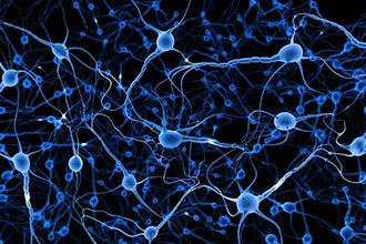 加州理工学院研究发现:信息编码神经元越多 形成记忆越持久