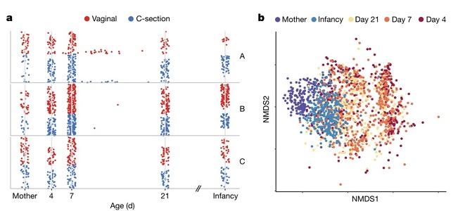 英国惠康桑格研究所:人体内的微生物与出生方式有关