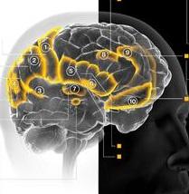 利维坦:你的大脑构建决定你的良知